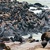 Seebären, Cape Cross