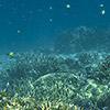 Papua New Guinea, Rabaul, Schnorcheln, Unterwasser