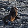 Neuseeland, Doubtful Sound, Seelöwen