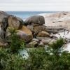 Brillenpinguine Boulders Beach