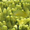 Papua-Neuguinea, Rabaul, Schnorcheln, Unterwasser