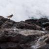 Lanzarote Seevögel