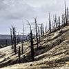 Kamtschatka, Tolbatschik, Toter Wald