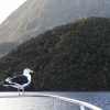 Neuseeland, Doubtful Sound, Fjord
