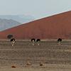 Namib Strauß