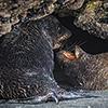 xflo:w Fotokalender 2014, Neuseeland Küsten Tierwelt
