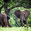 Chobe River – Botswana's Elephant Paradise