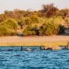 Elefanten kreuzen Fluss