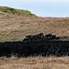Scotland peat cutting