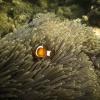 xflo:w Fotokalender 2012, Südwest-Pazifik