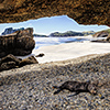 xflo:w photo calendar 2014, New Zealand coast wildlife