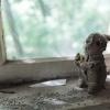 Chernobyl, Kopachi
