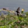 Makgadikgadi Pan, Grey go-away-bird