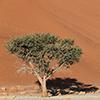 Namib Sossusvlei
