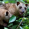 Papua New Guinea, Rabaul, Natur