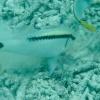 Palau Archipel, underwater