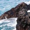 Lanzarote Krabbe