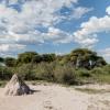 Botswana, Kalahari, CKGR