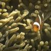 Anak Krakatau, Unterwasser