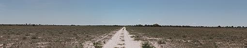 Botswana, Kalahari, CKGR Panorama