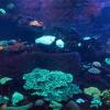 Neukaledonien, Aquarium des Lagons