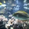 New Caledonia, Aquarium des Lagons