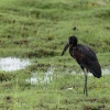 Chobe NP, bird life