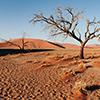 Namib Dünen