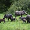 Chobe NP, warthog