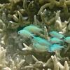 Palau Archipel, Unterwasser