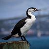 Auckland, Natur