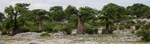 Makgadikgadi Pan, Kubu Island