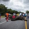 Chobe NP, toter Elefant