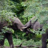 Chobe NP, elephant